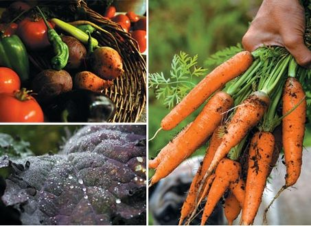large_organic_vegetable_group